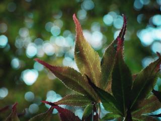 обои Красивые листья фото