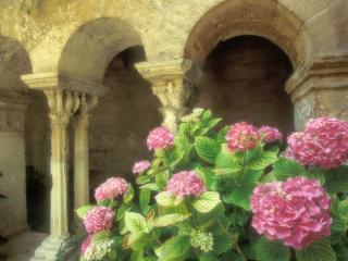 обои Розовый куст возле старго музея фото