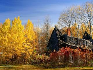 обои Заброшенный дом в осеннем лесу фото