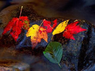 обои Листья на камне фото