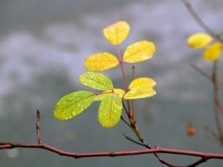 обои Ветка с желтеющими листьями фото