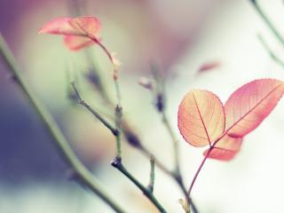 обои Листья деревьев фото
