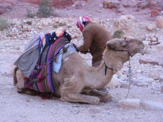 """обои Иордания, бедуин  и  """"корабль пустыни"""" фото"""
