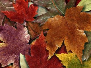 обои Осенний ковер из листьев фото