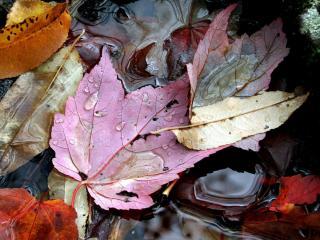 обои Осенний натюрморт из листьев фото