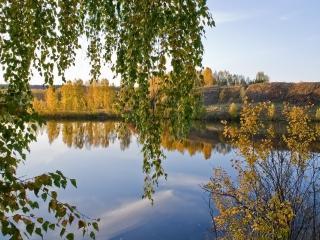 обои Осенний вечер в лесу фото