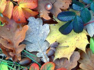 обои Многообразие красок листьев фото