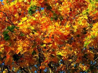 обои Золотые листья на деревьях фото
