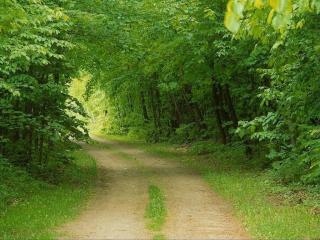 обои Дорога в лесу фото
