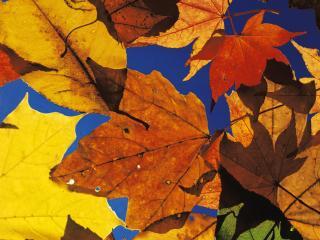 обои для рабочего стола: Осенний калейдоскоп