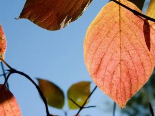 обои для рабочего стола: Листья на фоне неба
