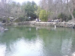 обои Лебединое озеро фото