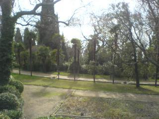 обои Пальмовая олея фото