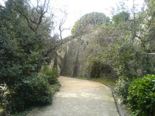 обои Парковые лаберинты фото