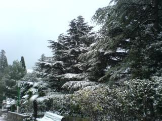 обои Первый снег фото