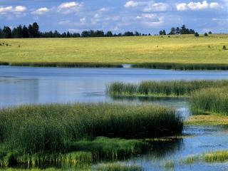 обои Летний пейзаж фото