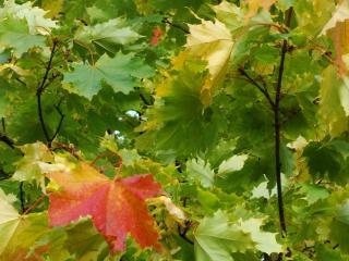 обои Осенняя поступь фото