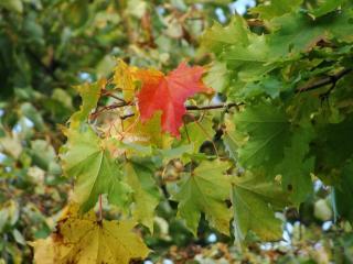 обои для рабочего стола: Ранняя осень в лесу