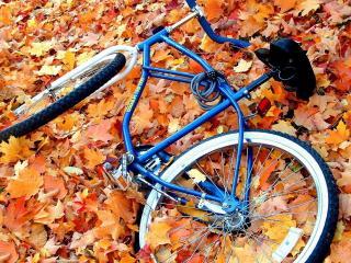 обои для рабочего стола: Велосипед лежит на осенних листьях