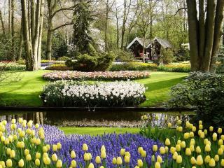 обои красивые цветы у дома фото