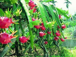 обои Оранжерея для кактусов фото
