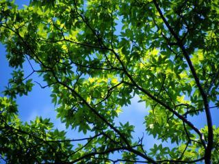 обои Летнее солнце на листьях зеленого дерева фото