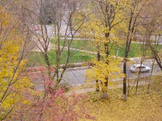 обои для рабочего стола: Осень пришла на улицу
