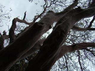 обои Ствол дерева на фоне неба фото