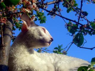 обои Кошка на дереве грееться фото