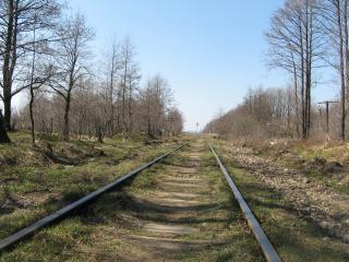 обои для рабочего стола: Железна дорога в лесу