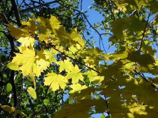 обои для рабочего стола: Осенние листья