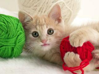 обои для рабочего стола: Кошка с цветными клубками нитей