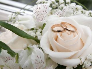 обои Два обручальных кольца на белоснежном бутоне фото