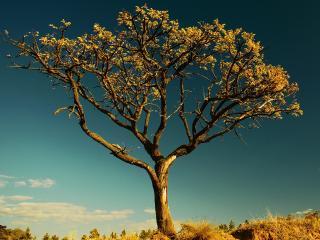 обои Cтариное осеннее дерево фото