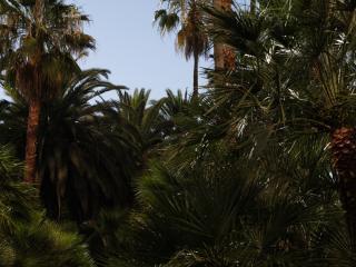 обои для рабочего стола: Чудо пальмы
