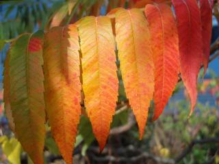 обои Ветка с осенними листьями фото