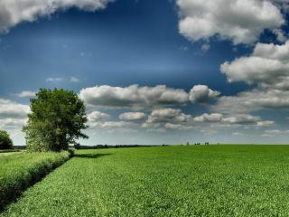 обои Небо над полем фото