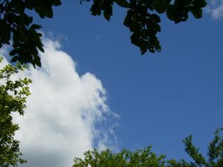 обои Небо с ветками фото