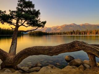 обои Лесное озеро фото