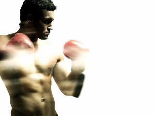 обои Одинокий боксер фото