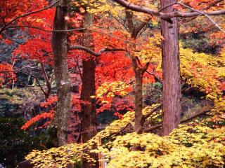 обои для рабочего стола: Осенняя пора
