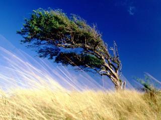 обои Силный ветер фото
