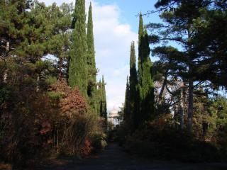 обои Бесдка среди деревьев фото
