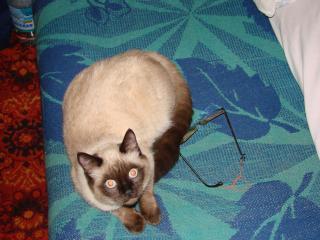 обои для рабочего стола: Интересующийся кот