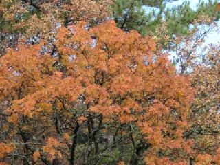обои Осенняя рябина фото