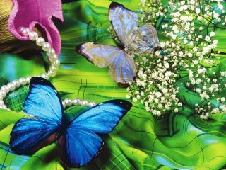 обои Разноцветные бабочки,на разных цветах фото