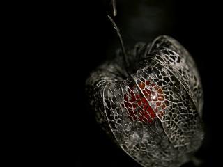 обои Серебренное яблоко фото