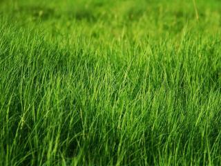 обои Пучок травы сплетен воедино фото