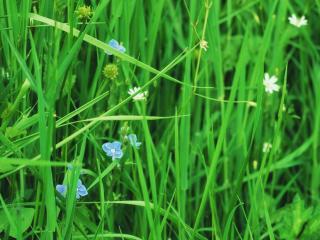обои Куча травы,растет на лугу фото