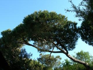 обои Деревья на Тоскане фото